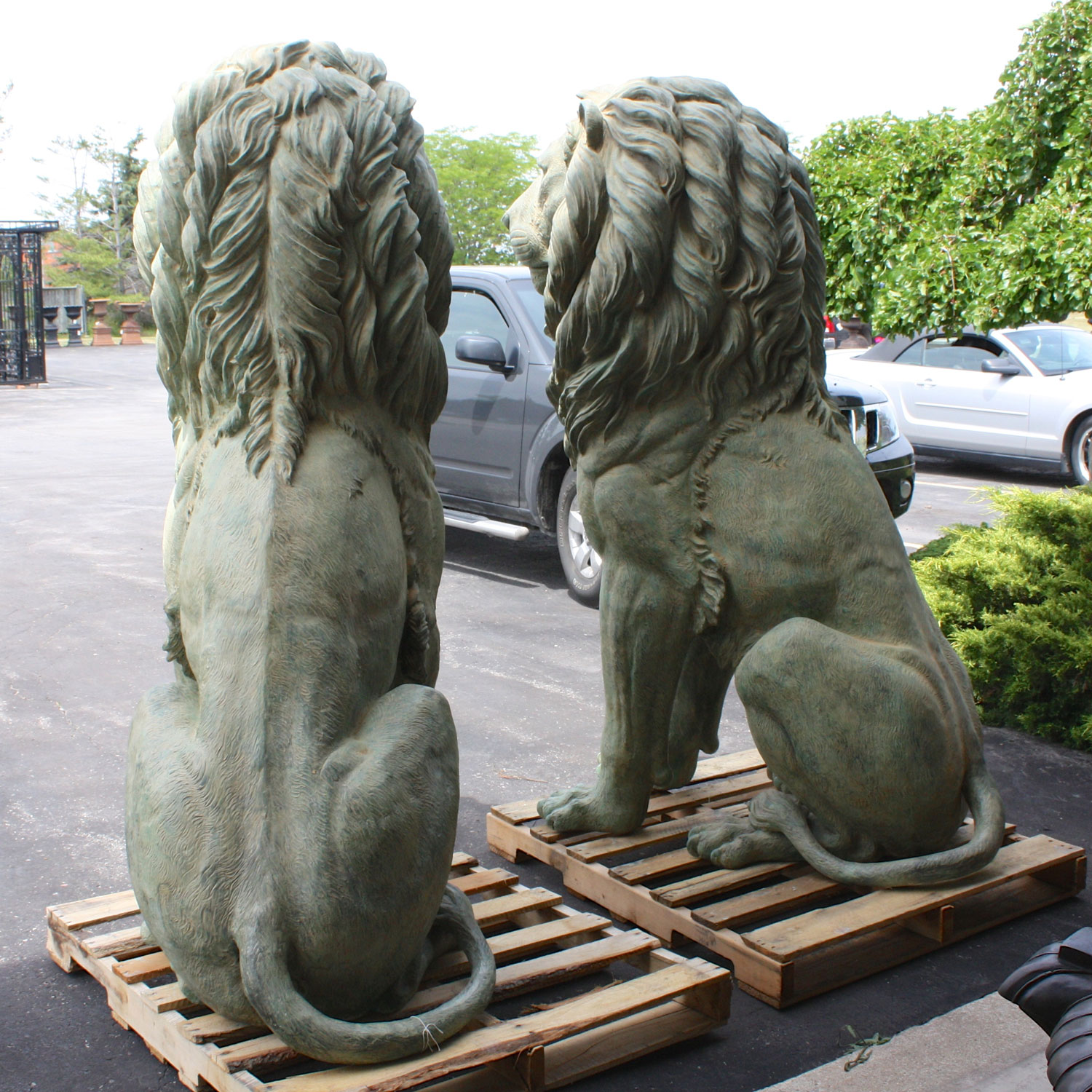 Xl Pair Of Bronze Sitting Lions In Patina Irongate
